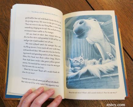 book cover design, illustrations